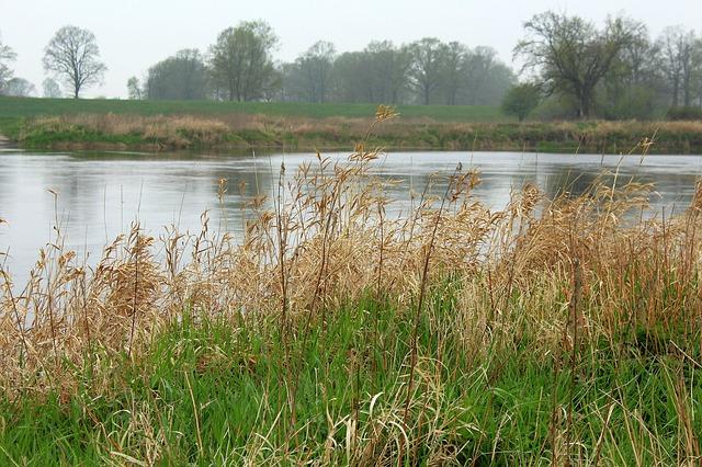 tráva u řeky