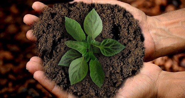 přesazování rostliny