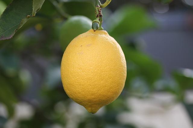 zralý citron
