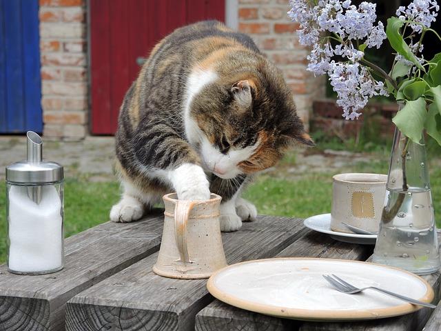 kočka zlodějka