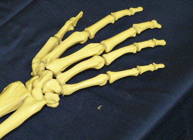 kostra zápěstí a prstů ruky